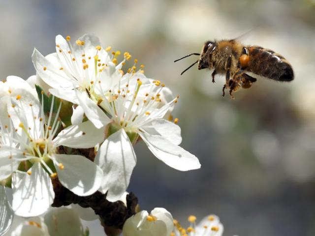 Bee 1333353 1920