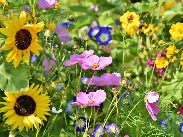 Flower Meadow 3598555 1920
