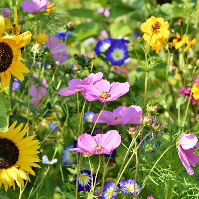 Flower Meadow 3598555 1920