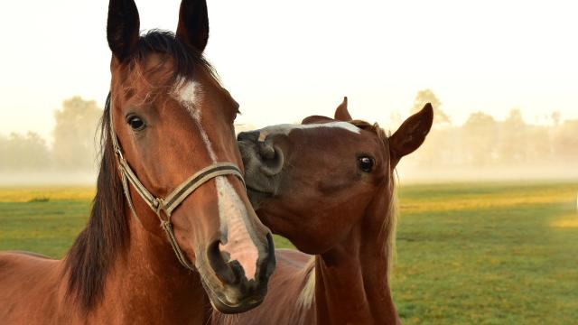 Horses 3747374 1920