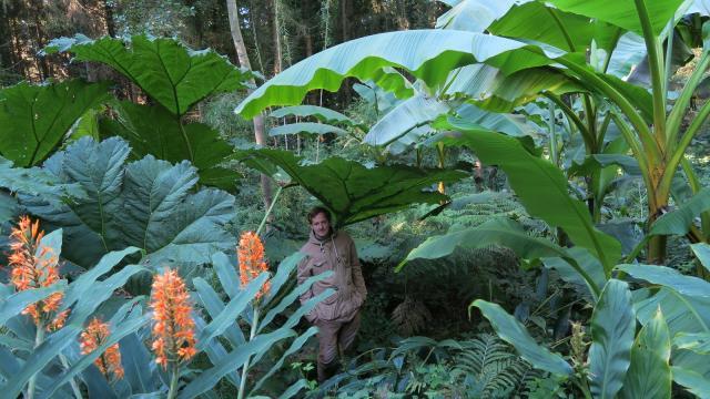 Jardin Jungle Karlostachys Ot Dltm 2018