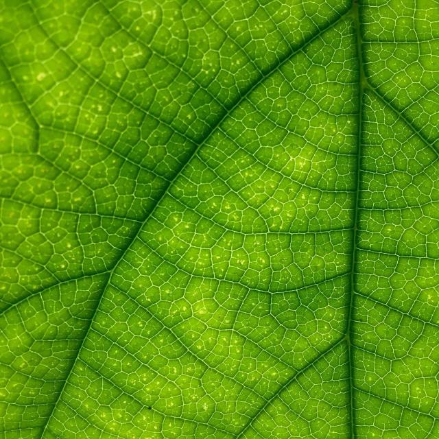 Leaf 1209927 1920